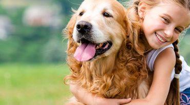 כלבנות-טיפולית-חינוכית באנר